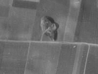 Flur Jennewitz 1953